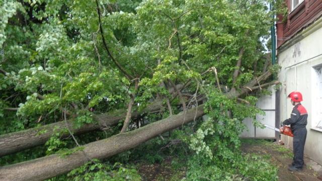 В Костроме ветер валит аварийные деревья
