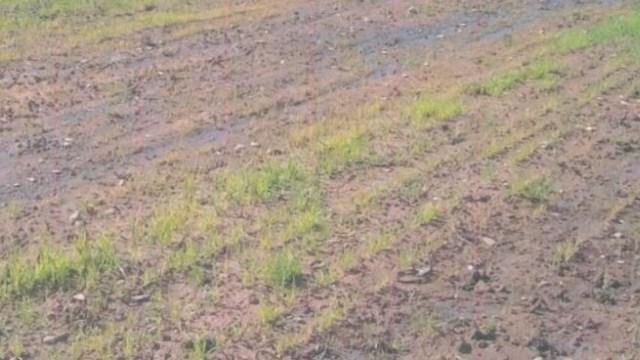 В Костромской области продолжает гибнуть урожай