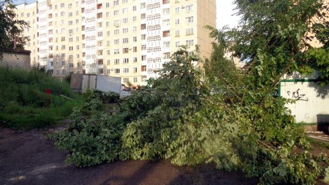 Кострома выдержала очередное испытание ураганным ветром.