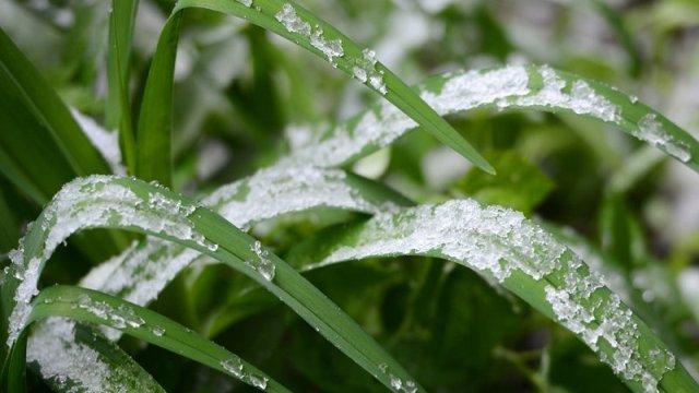 На территории Костромской области прогнозируются заморозки до -2