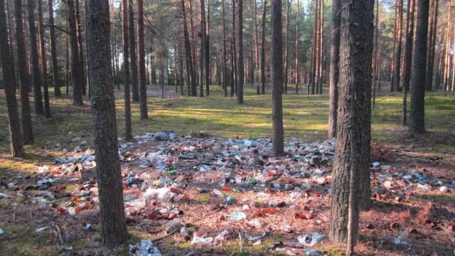 В поселке Горчуха Костромской области Сосновый бор превратили в помойку