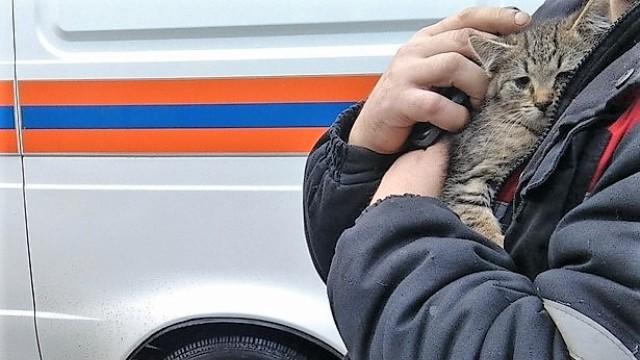 В Костроме спасатели вызволили котенка из под капота авто