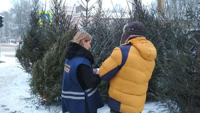 На елочных базарах в Костроме выявлены нарушения