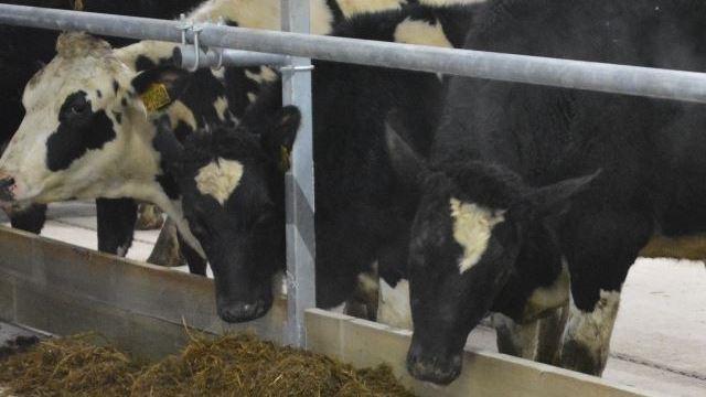 В Костромской области построили первый комплекс нового молочного завода